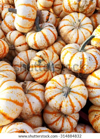 Sweet Dumpling squash at the autumn market. - stock photo