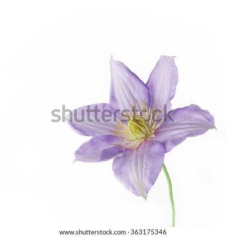 sweet flower on white isolated
