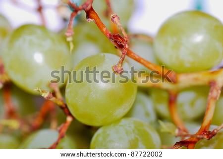 sweet green and mature grape - stock photo