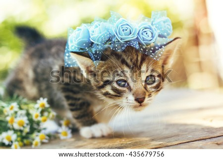 sweet kitten and flowers