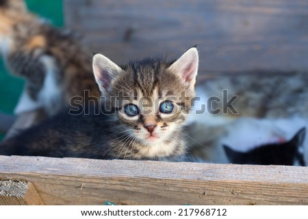Sweet little baby kitty close up - stock photo