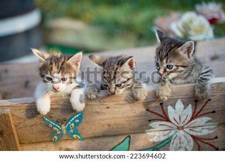 Sweet little kittens - stock photo