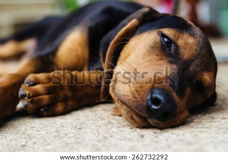 Sweet little puppy outdoors  - stock photo