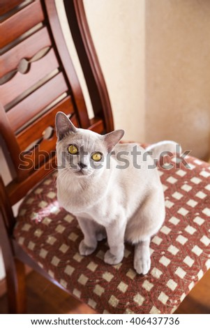 Sweet mature cat sits on the chair - stock photo