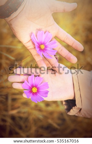 Sweet moment of Pink and red cosmos flowers in lovers hands,Blurry to soft focus and retro film look new color intrend tone.