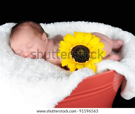 sweet newborn sleeping peacefully in a container. isolated n black - stock photo