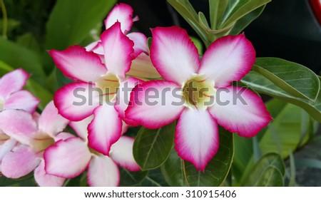 Lily (Liliaceae) - Lirios, Flores, Hojas y Tulipán - JRank Artículos