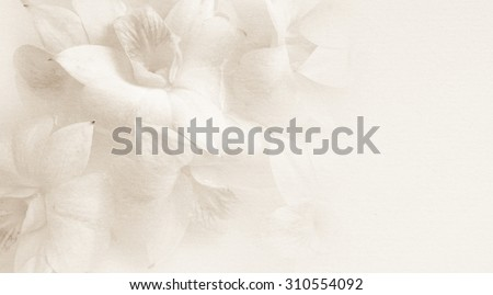 sweet orchids on mulberry paper texture for background - stock photo