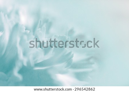 Sweet pastel color petal carnation in blur and soft style  on mulberry paper texture for background - stock photo