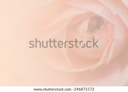 Sweet peach rose, Jubilee Celebration Rose, English Rose, blurred style with paper texture for soft background. - stock photo
