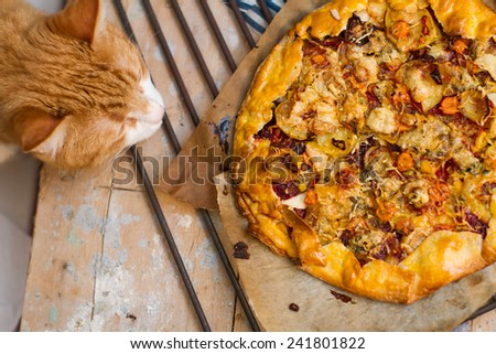 Sweet Potato and Beet Galette with Gorgonzola Cheese and Thyme with funny red cat, close up - stock photo