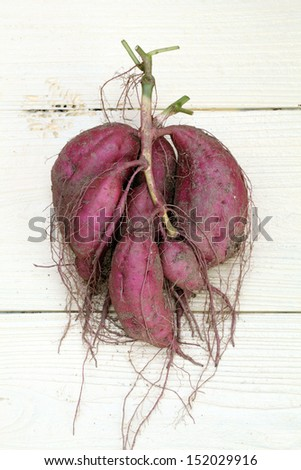 sweet potato plant with tubers on wood table - stock photo