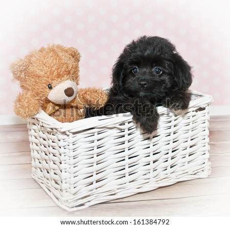 Sweet puppy in a basket with a cute little teddy bear. - stock photo