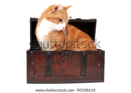 sweet red cat in treasure chest