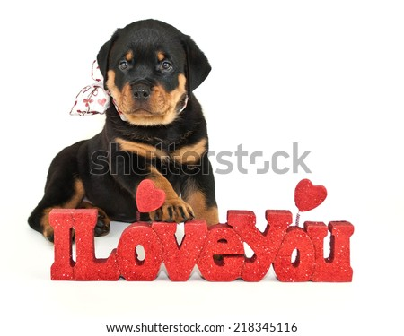 Sweet Rottweiler puppy sitting with an I Love You sign on a white background. - stock photo
