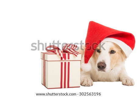 Sweet Santa Claus dog for xmas time on white background