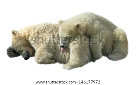 Sweet sleeping of two polar bear cubs, isolated on white background.