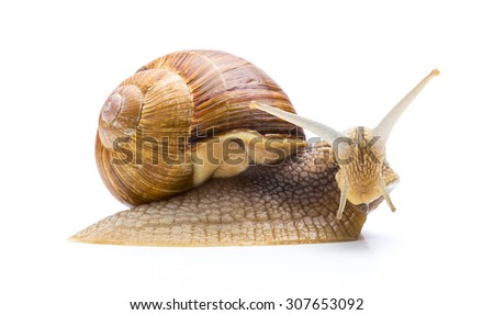 sweet snail isolated on white background - stock photo