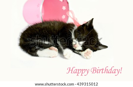 Sweet tabby kitten sleeping with a pink bow on white background, gift, happy birthday card concept - stock photo