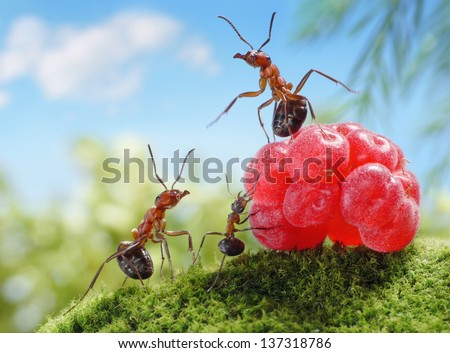 sweets are unhealthy for children!  ant tales, ants and raspberry - stock photo