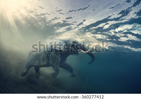 Swimming Elephant Underwater. African elephant in ocean with sunrays and ripples at water surface. - stock photo