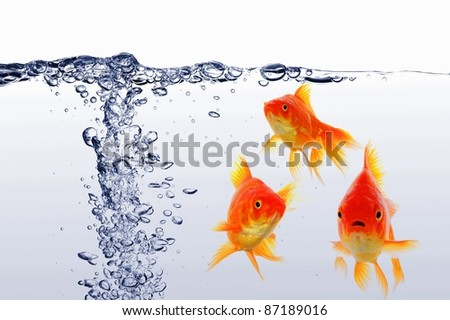 swimming goldfish in fishtank with water or air bubbles - stock photo