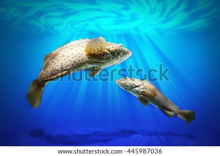 Swimming grouper fish in rising of sun under ocean water  - stock photo