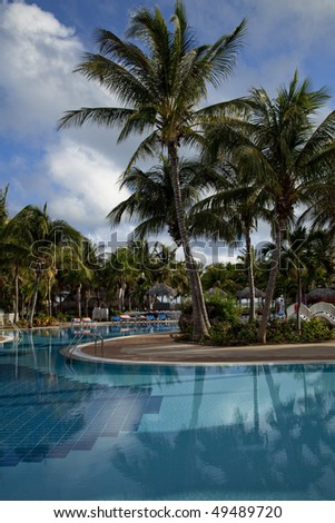 swimming pool and palm trees