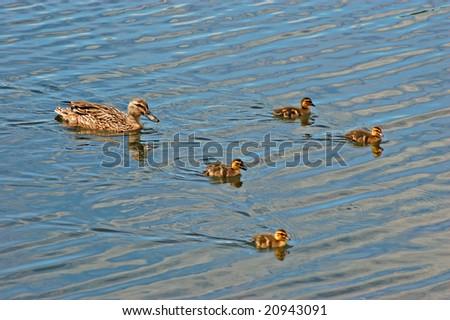 swimming with mum - stock photo