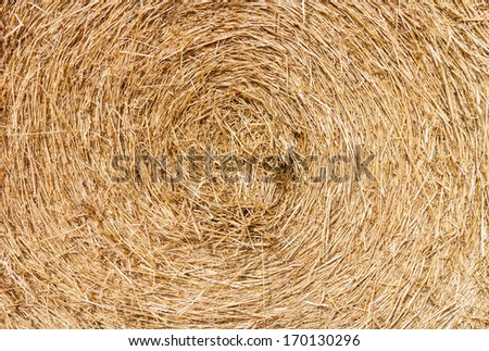 Swirly rice straw - stock photo