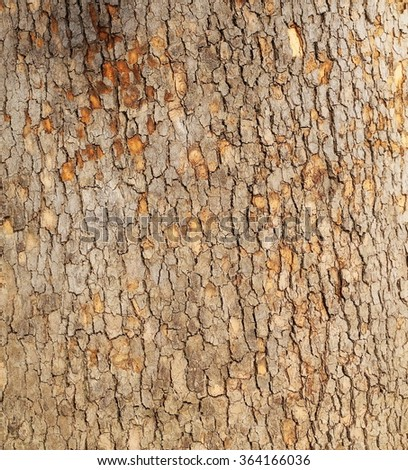 sycamore tree background and texture