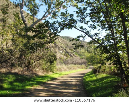 Sycamore trees in Point Mugu State Park, Malibu, CA - stock photo