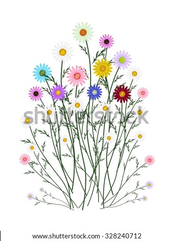 Symbol of Love, Bright and Beautiful Assorted Osteospermum Daisy Flowers or Cape Daisy Blossoms Isolated on White Background. - stock photo