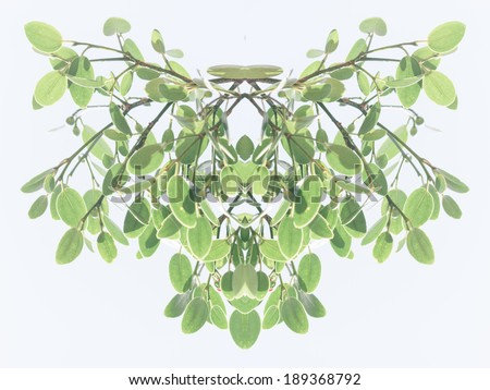 Symmetrical decorative foliate pattern of fresh green leaves on hanging branches with a faded toned effect on a light grey background - stock photo