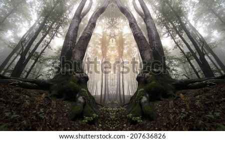 symmetrical forest with trees resembling a magical gate