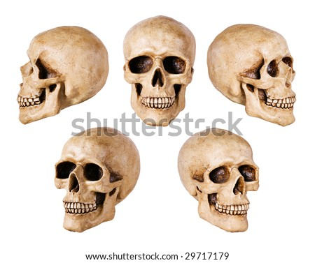 synthetic skull many angle view on white with clipping path - stock photo