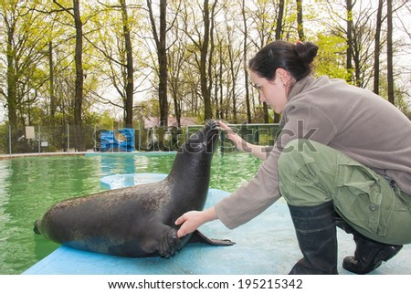 SZEGED, HUNGARY - MARCH 31. 2014. - Training a harbor seal (Phoca vitulina) in Szeged Zoo, Hungary