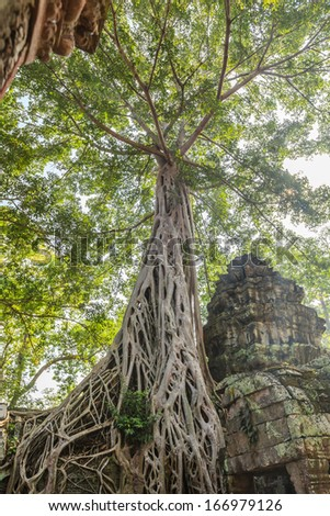 Ta Prohm Castle, Angkor Thom, Cambodia. The ancient castle under the big tree.