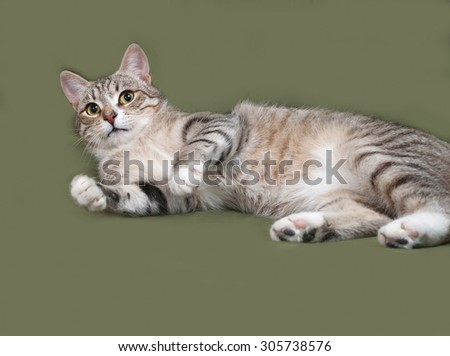 Tabby and white cat lies on green background