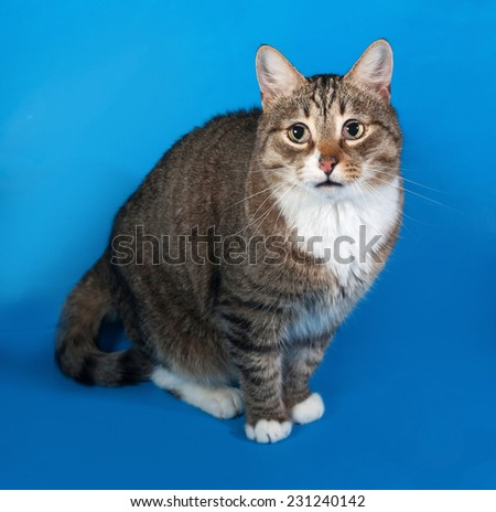Tabby and white cat with sick eyes sitting on blue background - stock photo