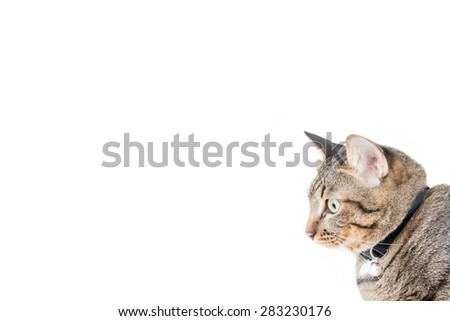 tabby cat blurry with white background. Place for text - stock photo