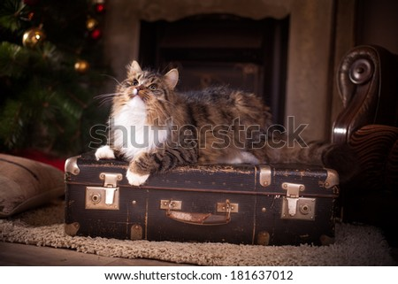 tabby cat by the fireplace - stock photo