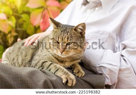 Tabby cat enjoying cuddling in old man's lap - stock photo