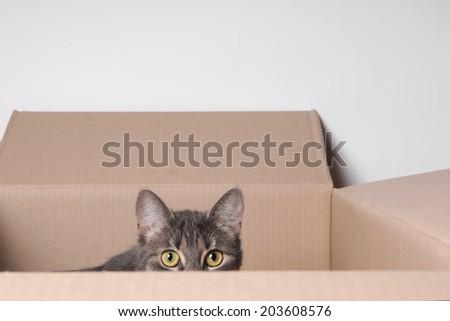 tabby cat hiding in a carton  - stock photo