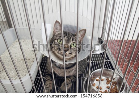 Tabby cat in a cone - stock photo
