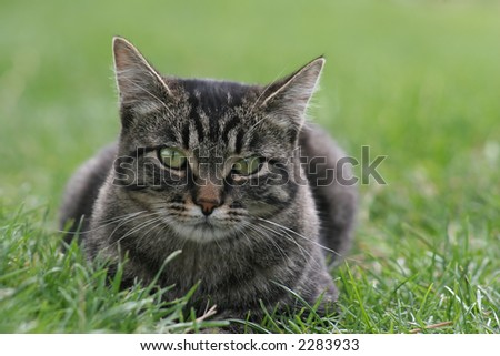 Tabby cat in the grass - stock photo