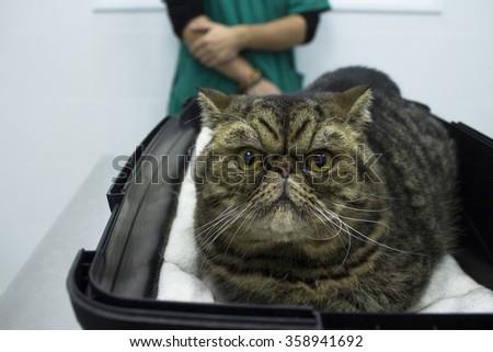 Tabby cat in the veterinary's office - stock photo