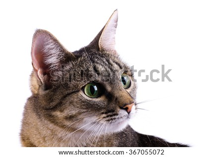 Tabby cat isolated over white background - stock photo