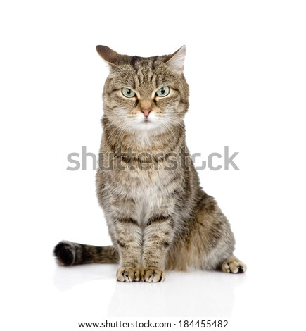 tabby cat looking at camera. isolated on white background - stock photo