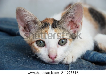 Tabby Cat Looking at You  - stock photo